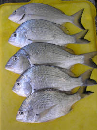 quality bream